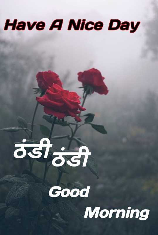 💐 फ्लावर फोटोग्राफी - Have A Nice Day ösiost Good Morning - ShareChat