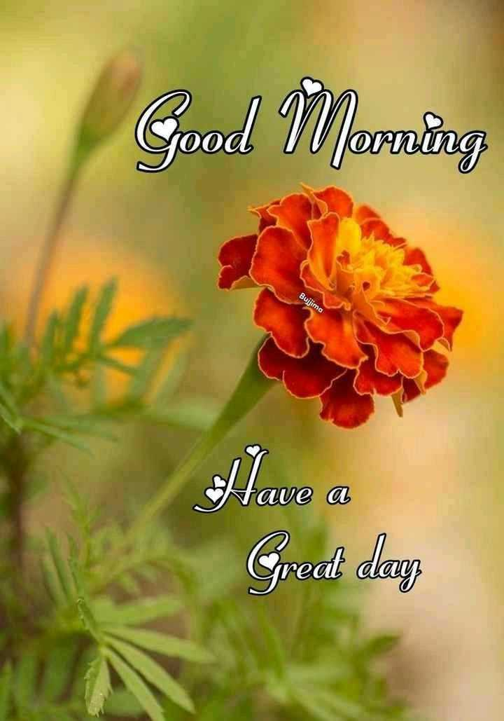 💐 फ्लावर फोटोग्राफी - Good Morning Buijima Have a Great danz - ShareChat