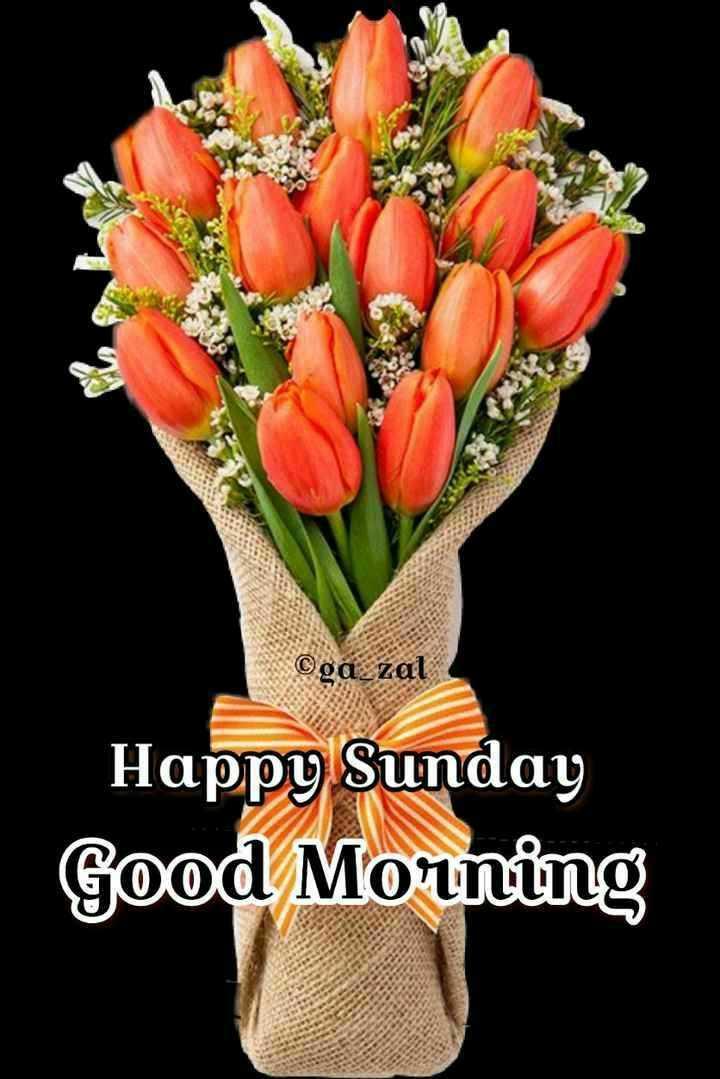 💐 फ्लावर फोटोग्राफी - ©ga _ zal Happy Sunday Good Morning - ShareChat