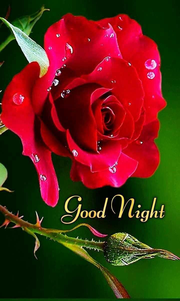 💐 फ्लावर फोटोग्राफी - my Good Night - ShareChat