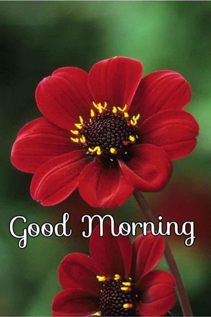 💐 फ्लावर फोटोग्राफी - Good Morning - ShareChat