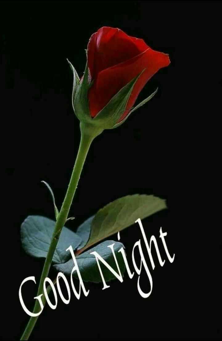 💐 फ्लावर फोटोग्राफी - Good Night - ShareChat