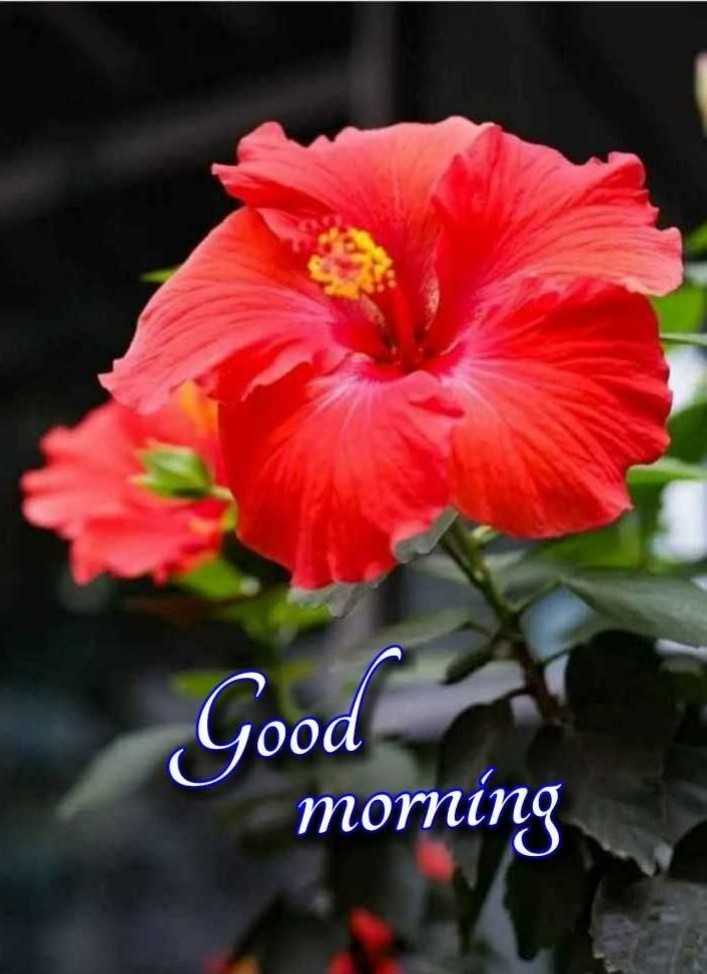 💐 फ्लावर फोटोग्राफी - Good pood morning - ShareChat