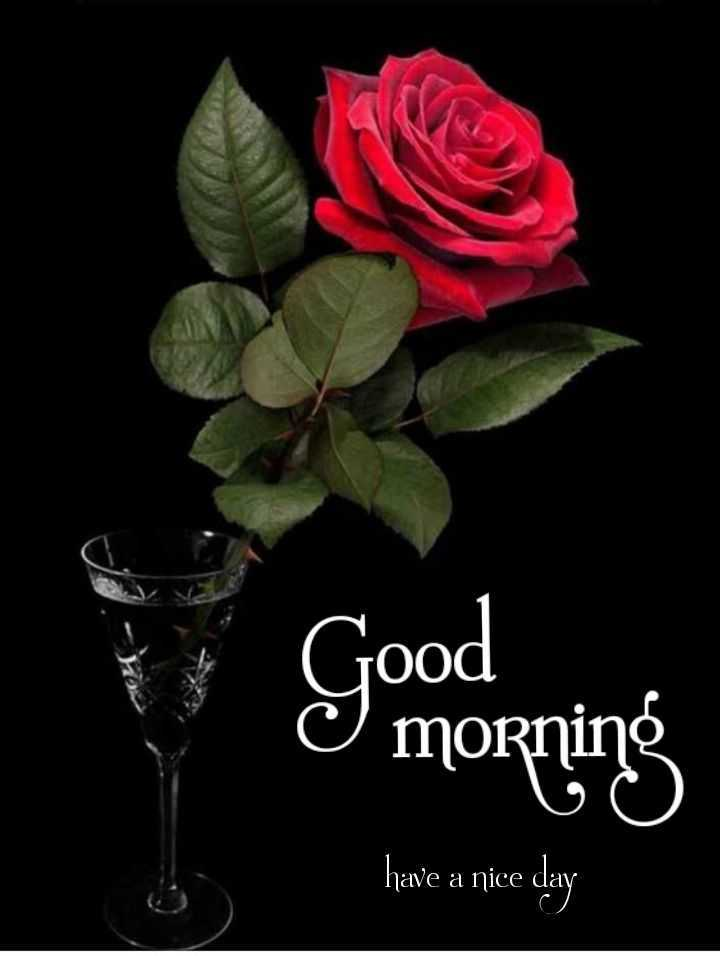 💐 फ्लावर फोटोग्राफी - Good Y morning have a nice day - ShareChat