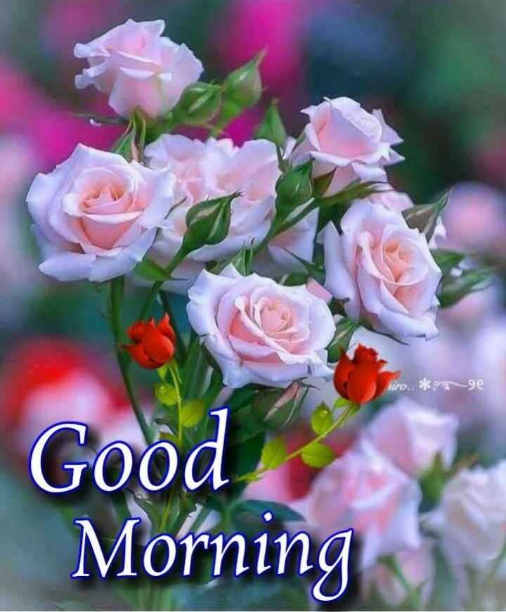 💐 फ्लावर फोटोग्राफी - uro . . * ge Good Morning - ShareChat