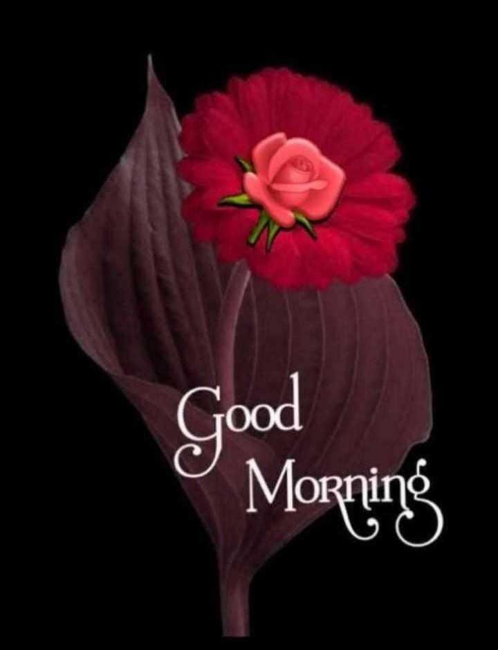 💐 फ्लावर फोटोग्राफी - 9 Morning Good - ShareChat