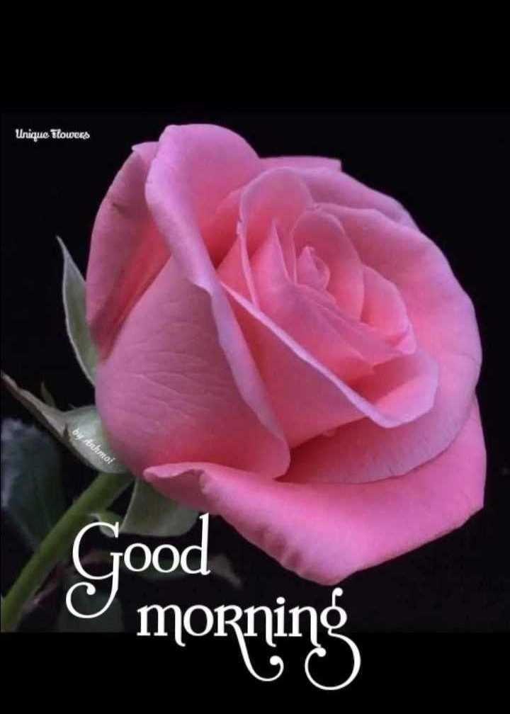 💐 फ्लावर फोटोग्राफी - Unique Flowers Oy Armoi Good morning - ShareChat
