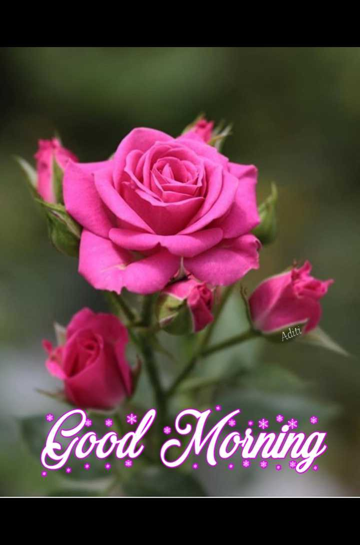 💐 फ्लावर फोटोग्राफी - Aditi Good Morning - ShareChat