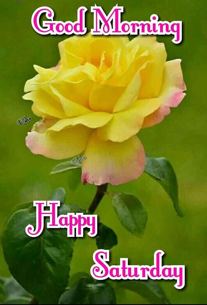 💐 फ्लावर फोटोग्राफी - Good Morning Usha dhe Happy Saturday - ShareChat
