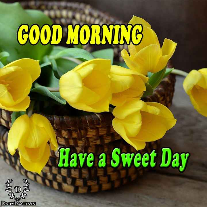 💐 फ्लावर फोटोग्राफी - GOOD MORNING Have a Sweet Day DAILY MAGES . IN - ShareChat