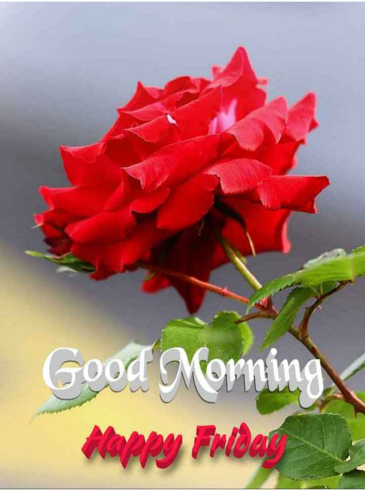💐 फ्लावर फोटोग्राफी - Good Morning Alappy Folder - ShareChat