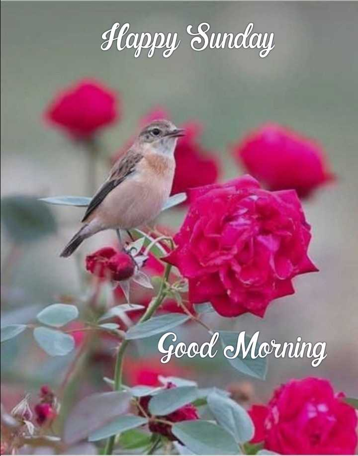 💐 फ्लावर फोटोग्राफी - Happy Sunday Good Morning - ShareChat