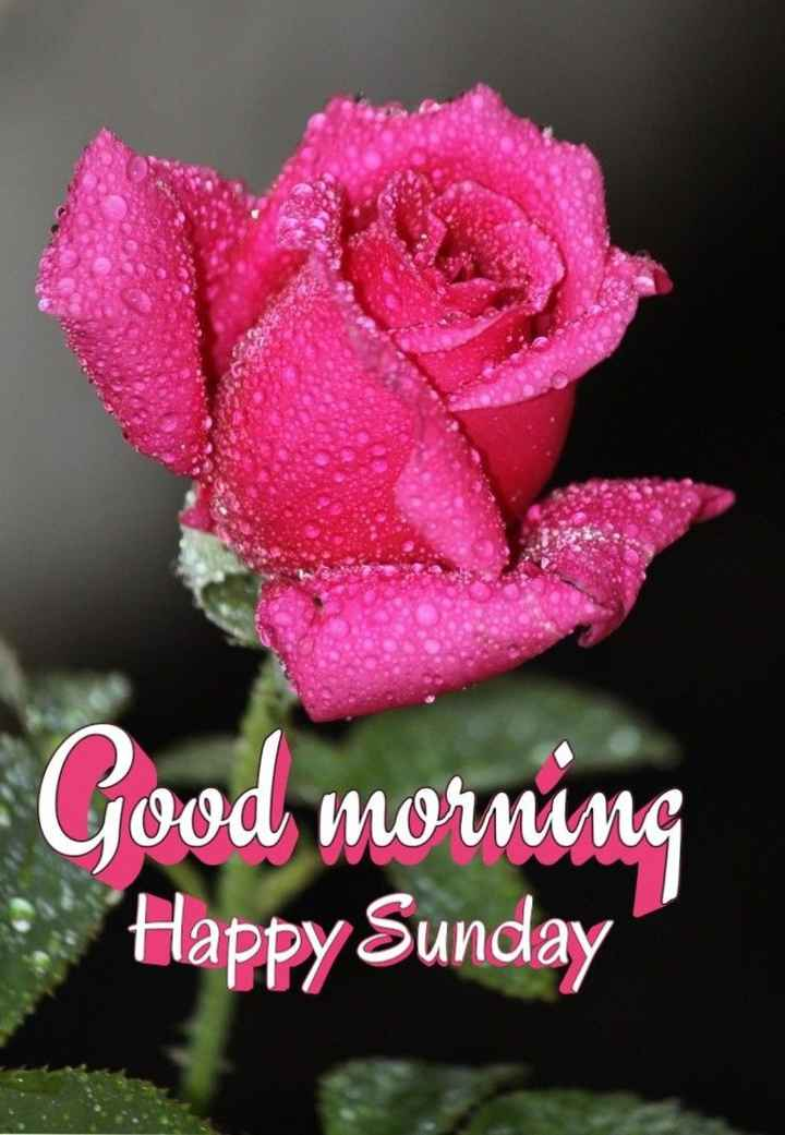 💐 फ्लावर फोटोग्राफी - Good morning Happy Sunday - ShareChat