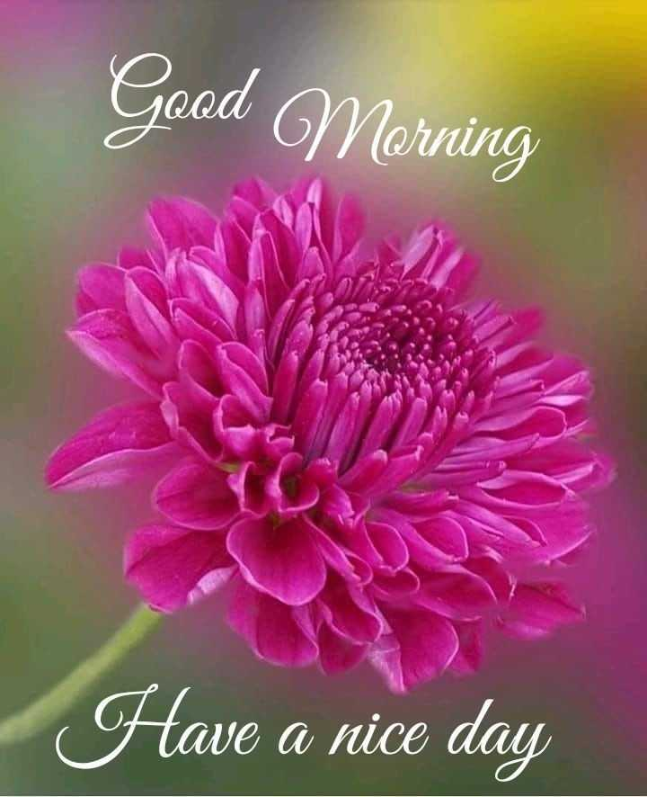 💐 फ्लावर फोटोग्राफी - Good Morning Have a nice day - ShareChat