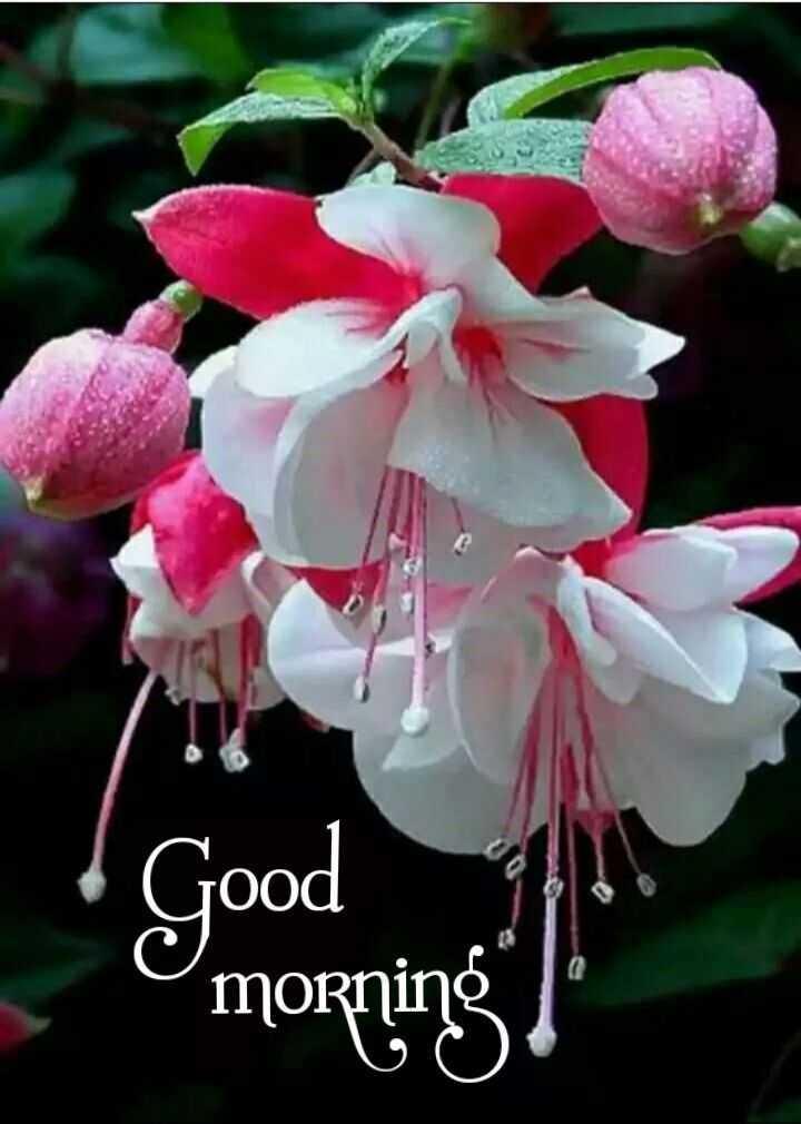 💐 फ्लावर फोटोग्राफी - Good C morning - ShareChat