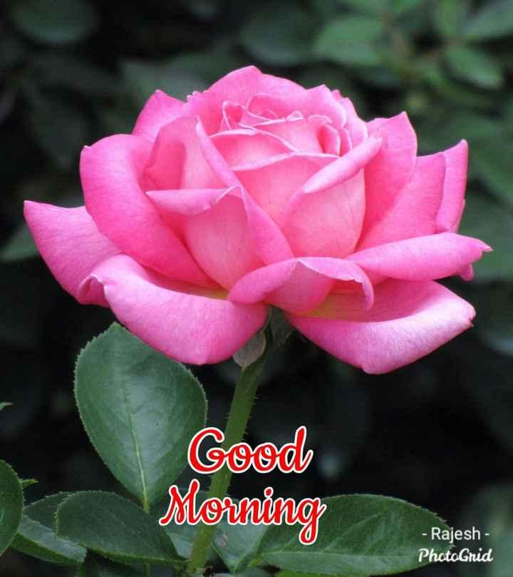 💐 फ्लावर फोटोग्राफी - Cood Morning - Rajesh - PhotoGrid - ShareChat
