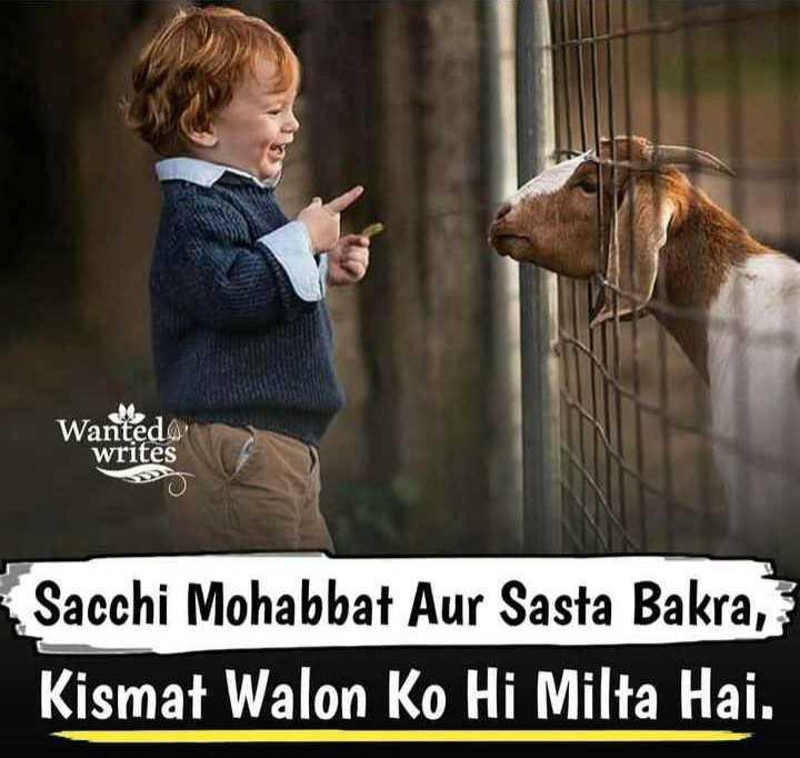 😃😃बकरा ईद जोक्स 😃😃 - Wantedo writes Sacchi Mohabbat Aur Sasta Bakra , Kismat Walon Ko Hi Milta Hai . - ShareChat