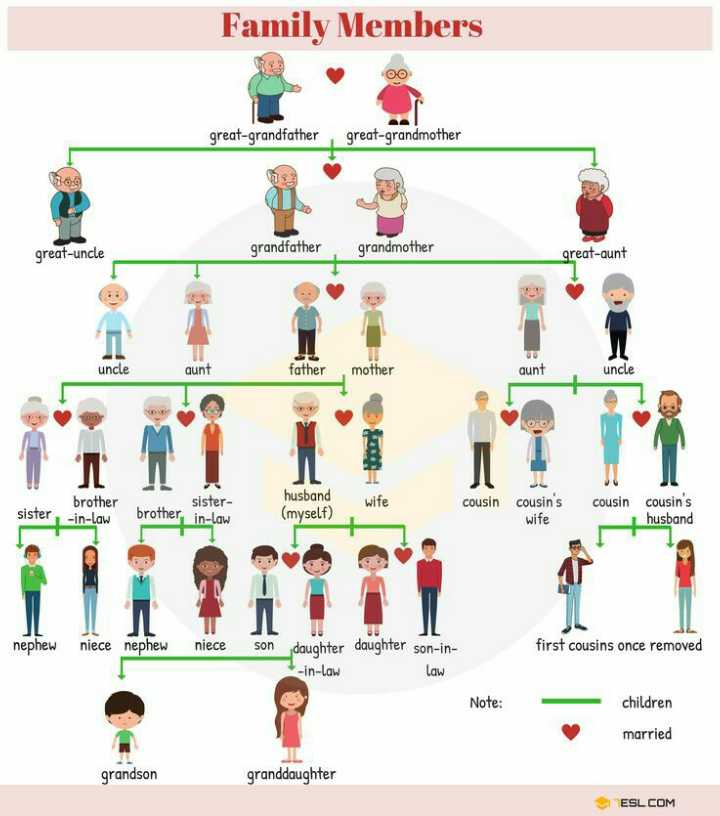 📚बच्चों की पढ़ाई - Family Members 00 great - grandfather great - grandmother 360 great - uncle grandfather grandmother great - aunt uncle aunt father mother aunt uncle sister wife brother - in - law husband ( myself ) cousin cousin ' s cousin sister brother in - law cousins husband wife IN TIL nephew niece nephew niece son first cousins once removed daughter daughter son - in - in - law Law Note : children married grandson granddaughter ESL . COM - ShareChat