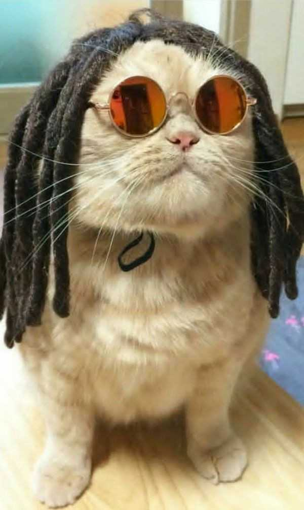 बावली  बिल्ली - ShareChat