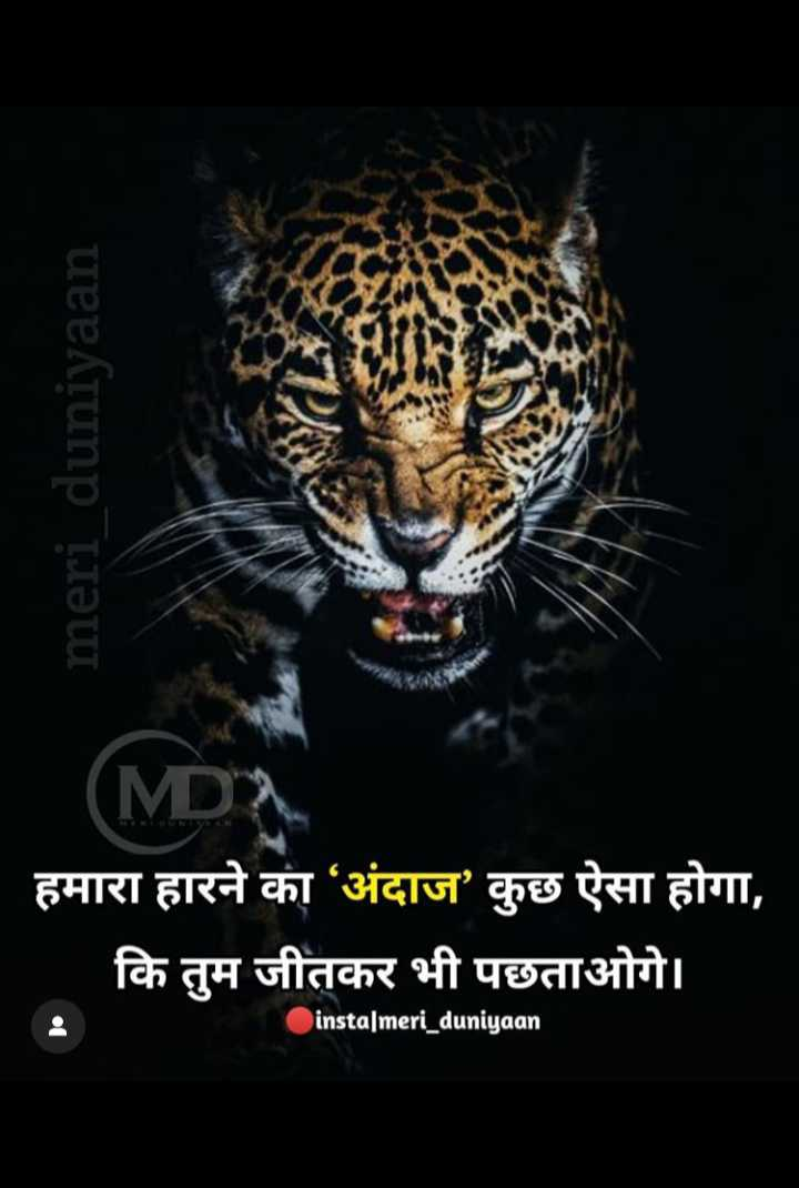 🤘 बॉयज गैंग 😎 - meri _ duniyaan ( MDA . हमारा हारने का अंदाज ' कुछ ऐसा होगा , कि तुम जीतकर भी पछताओगे । . instalmeri _ duniyaan - ShareChat