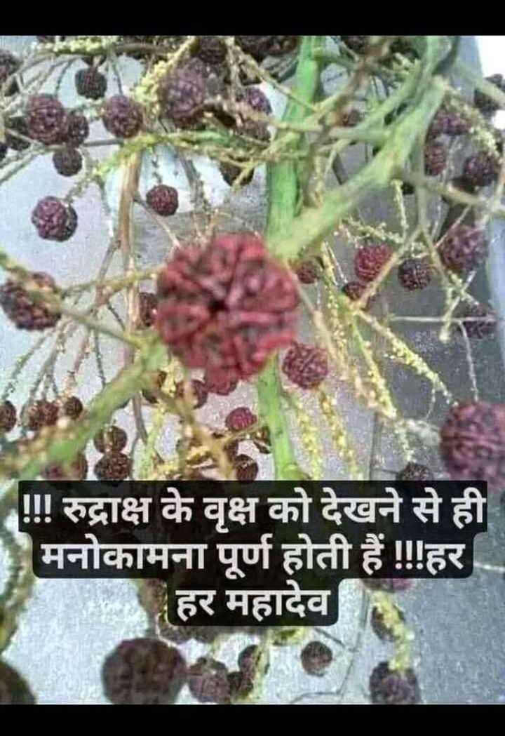 🙏 भक्ति - ! ! ! रुद्राक्ष के वृक्ष को देखने से ही मनोकामना पूर्ण होती हैं ! ! ! हर हर महादेव - ShareChat
