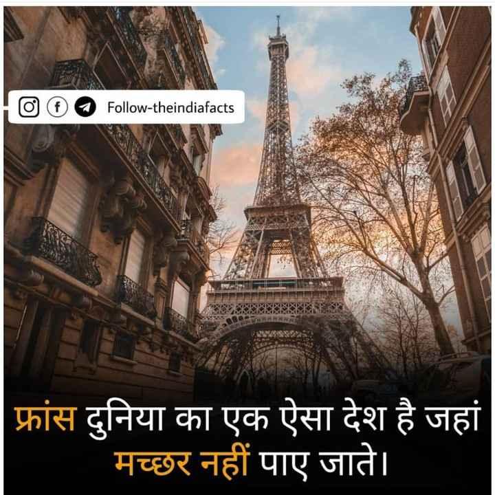 👌 मज़ेदार तथ्य - 1000 Follow - theindiafacts फ्रांस दुनिया का एक ऐसा देश है जहां मच्छर नहीं पाए जाते । - ShareChat