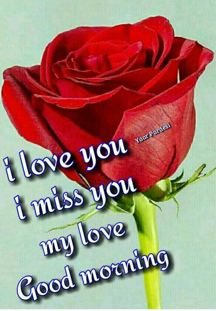 🤣मज़ेदार फ़ोटो - Yaar Pardesi i love you want and i miss you my love Good morning - ShareChat