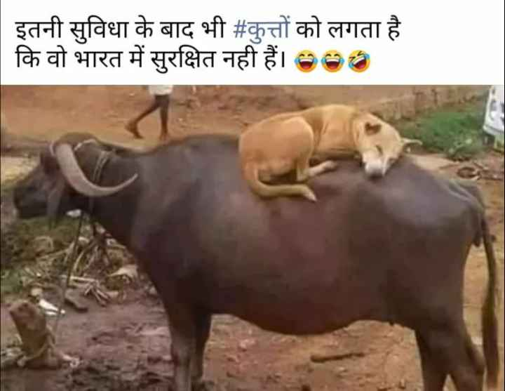 🤣 मज़ेदार फ़ोटो - | इतनी सुविधा के बाद भी # कुत्तों को लगता है कि वो भारत में सुरक्षित नही हैं । 900 - ShareChat