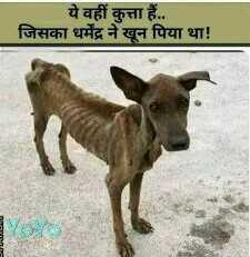 🤣मज़ेदार फ़ोटो - ये वहीं हैं . . जिसका धर्मेंद्र ने खून पिया था ! - ShareChat
