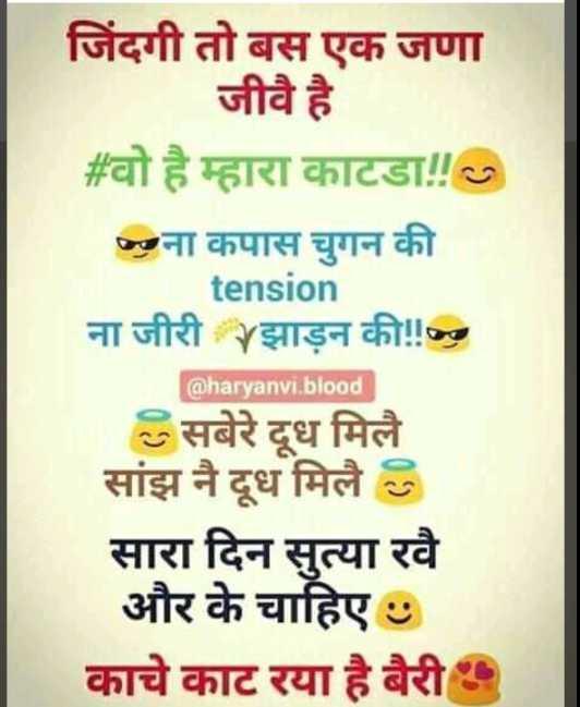 😜 मजाकिया फोटू - जिंदगी तो बस एक जणा जीवै है # वो है म्हारा काटडा ! ! ना कपास चुगन की tension ना जीरी झाड़न की ! ! @ haryanvi . blood सबेरे दूध मिलै सांझ नै दूध मिले 8 सारा दिन सुत्या रवै और के चाहिए काचे काट रया है बैरी - ShareChat