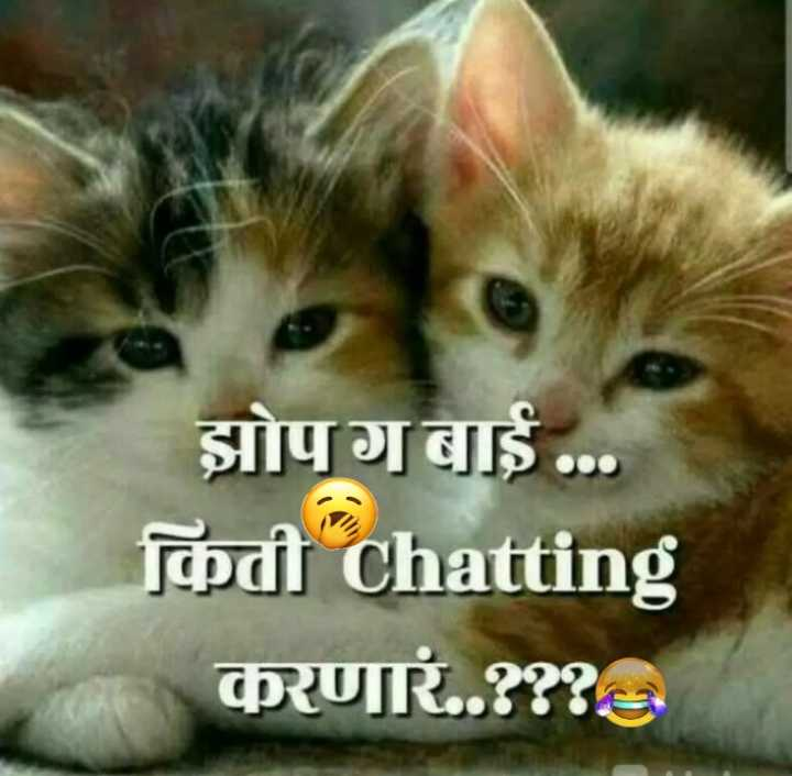 🐈मनी म्याऊ/प्राणी प्रेम - झोपगबाई . . . किती chatting करणार . . ? ? ? - ShareChat