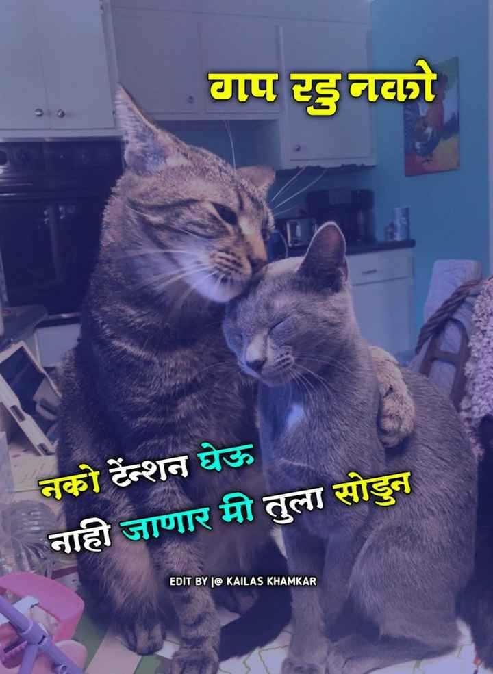 🐈मनी म्याऊ/प्राणी प्रेम - वाप इनो नको टेन्शन घेऊ नाही जाणार मी तुला सोडुन EDIT BY | @ KAILAS KHAMKAR - ShareChat