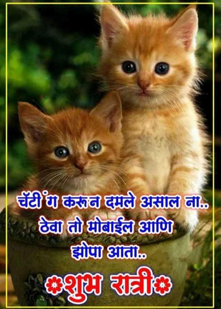 🐈मनी म्याऊ/प्राणी प्रेम - टीका असीले ना . दो दोबाईब्य आणि झोपण . / ET - ShareChat