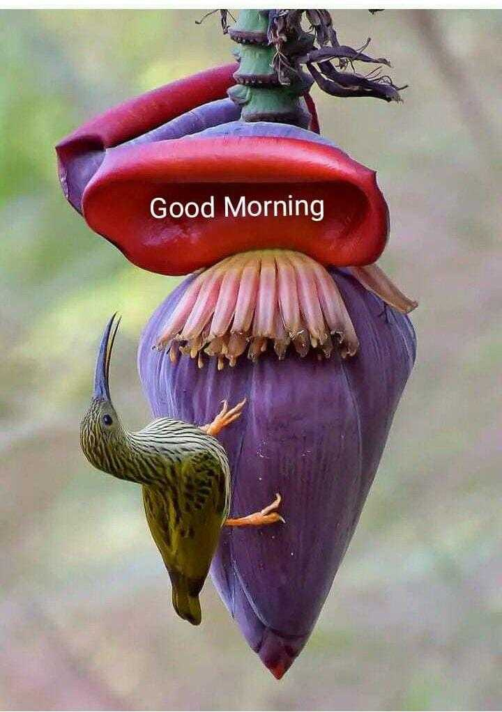 माय विकली - Good Morning - ShareChat