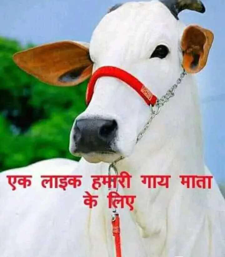 👌 मेरा टैलेंट 👏 - एक लाइक हमारी गाय माता के लिए - ShareChat