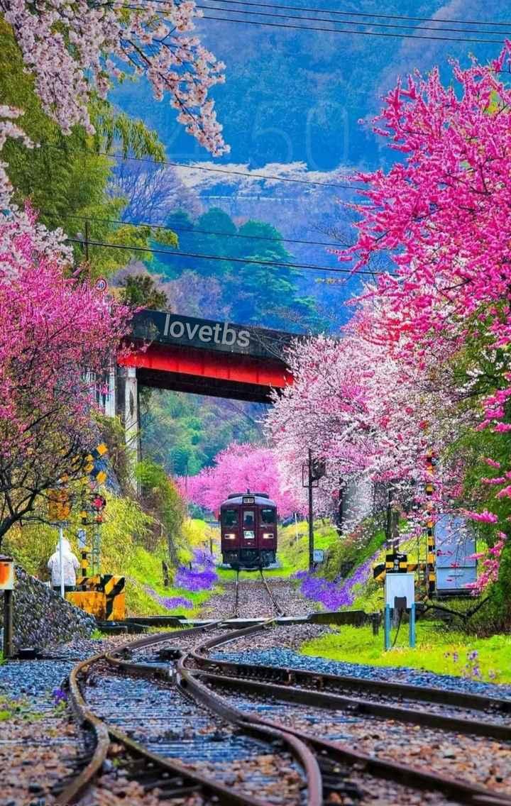 🏙 मेरा प्यारा शहर - lovetbs - ShareChat