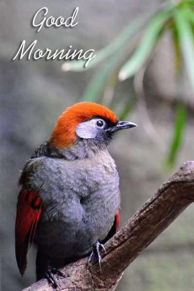 🌄 मेरी आज की सुबह - Good Morning - ShareChat