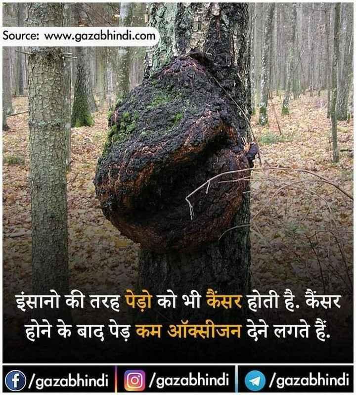मेरे विचार - Source : www . gazabhindi . com   इंसानो की तरह पेड़ो को भी कैंसर होती है . कैंसर होने के बाद पेड़ कम ऑक्सीजन देने लगते हैं . ( f ) / gazabhindi   O / gazabhindi ] / gazabhindi - ShareChat