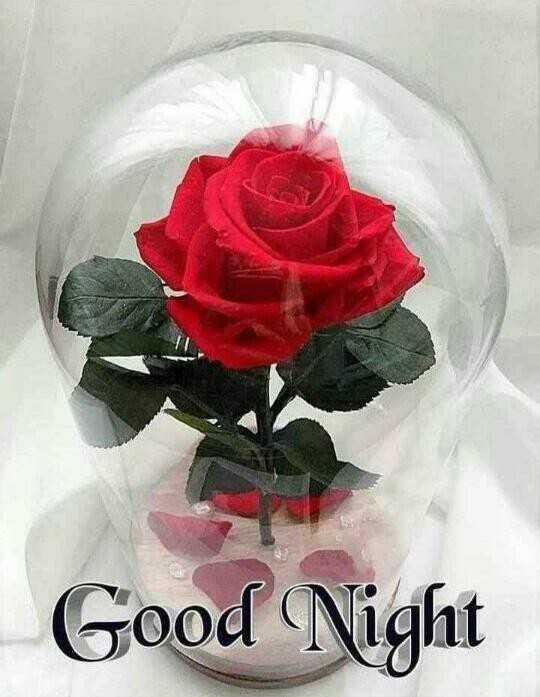 🤘मैत्री - Good Night - ShareChat