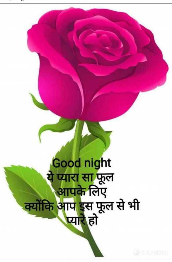 राम राम सा शुभ रात्रि 🙏 - Good night ये प्यारा सा फूल आपके लिए क्योंकि आप इस फूल से भी प्यारे हो - ShareChat