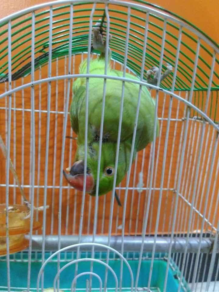 🦜राष्ट्रीय पोपट दिवस - ShareChat