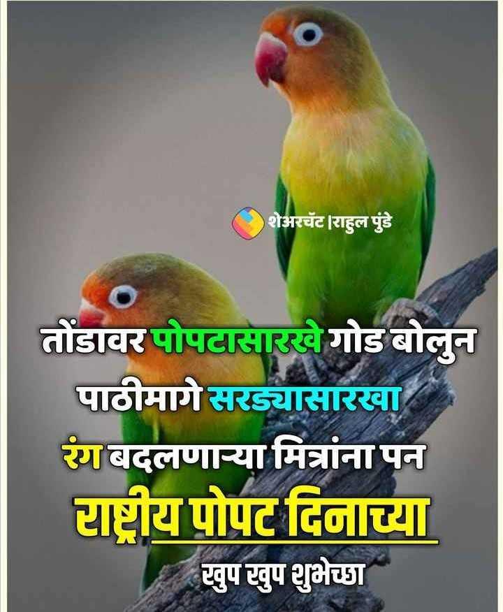 🦜राष्ट्रीय पोपट दिवस - शेअरचॅट । राहुल पुंडे तोंडावर पोपटासारखे गोड बोलुन पाठीमागे सरड्यासारखा रंग बदलणाऱ्या मित्रांना पन राष्ट्रीय पोपट दिनाच्या खुप खुप शुभेच्छा - ShareChat