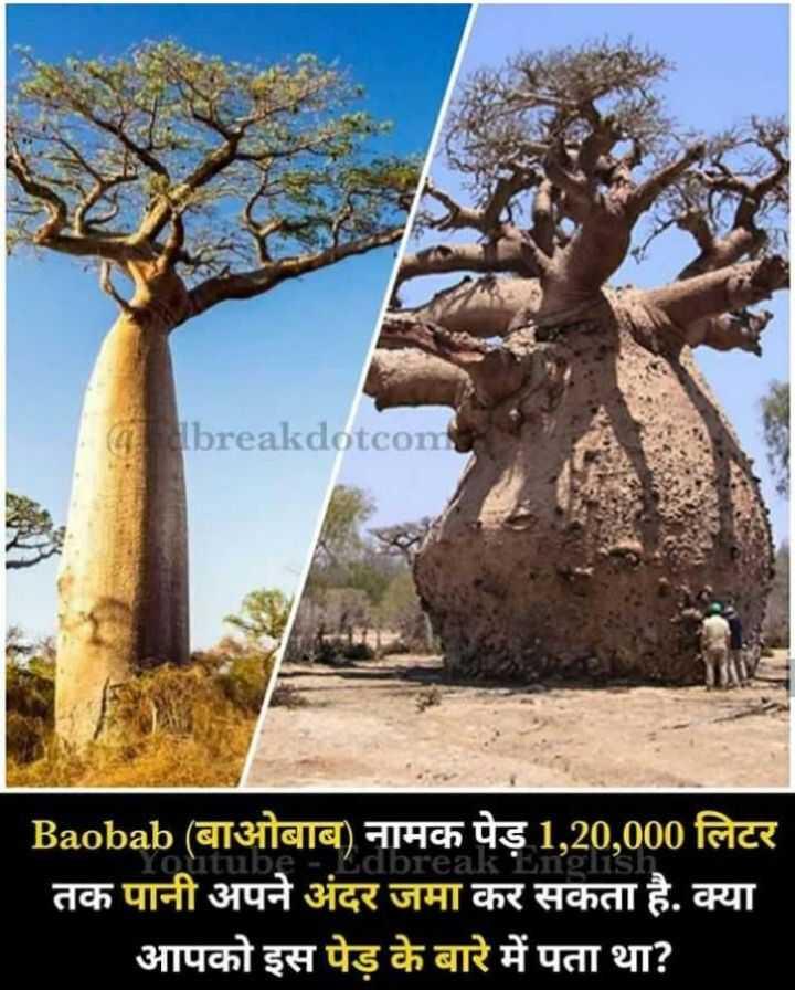 😏 रोचक तथ्य - breakdotcon Sdbreal Baobab ( बाओबाब ) नामक पेड़ 1 , 20 , 000 लिटर तक पानी अपने अंदर जमा कर सकता है . क्या आपको इस पेड़ के बारे में पता था ? - ShareChat