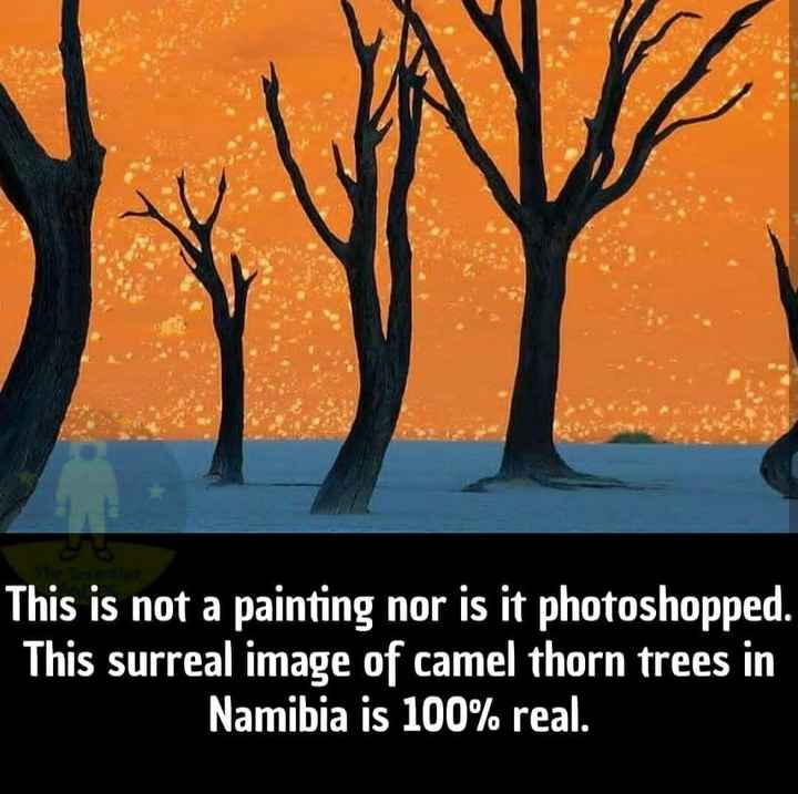 रोचक तथ्य - This is not a painting nor is it photoshopped . This surreal image of camel thorn trees in Namibia is 100 % real . - ShareChat