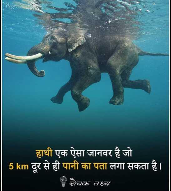 😏 रोचक तथ्य - हाथी एक ऐसा जानवर है जो 5 km दूर से ही पानी का पता लगा सकता है । रोचक तथ्य - ShareChat