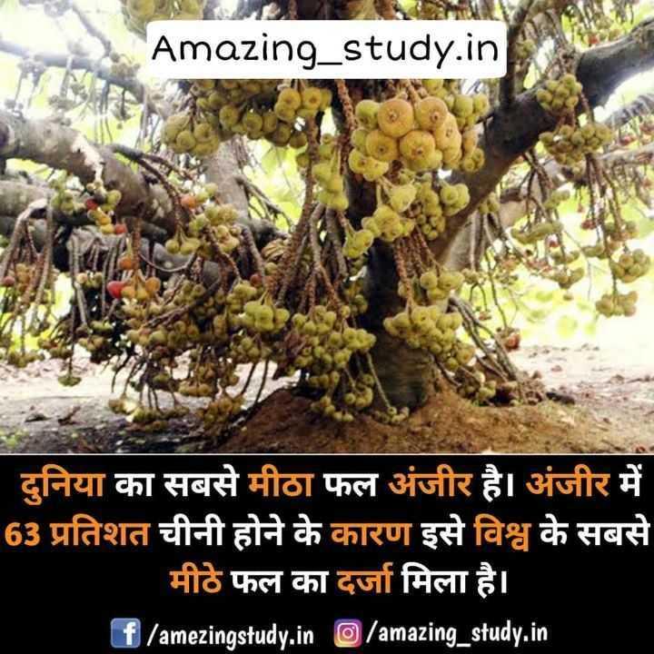 😏 रोचक तथ्य - Amazing _ study . ina दुनिया का सबसे मीठा फल अंजीर है । अंजीर में 63 प्रतिशत चीनी होने के कारण इसे विश्व के सबसे मीठे फल का दर्जा मिला है । f / amezingstudy . in / amazing _ study . in - ShareChat
