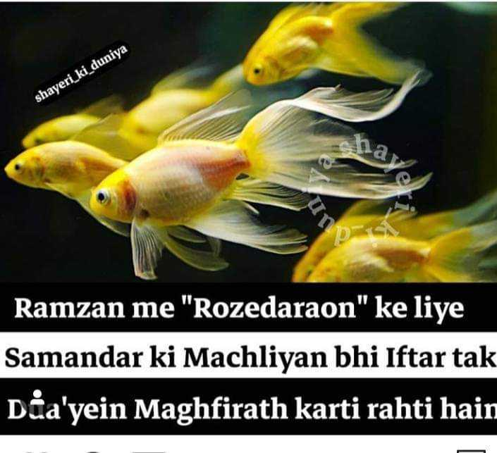 रोज़ेदार - shayeri _ ki _ duniya Ramzan me Rozedaraon ke liye Samandar ki Machliyan bhi Iftar tak Dia ' yein Maghfirath karti rahti hain - ShareChat