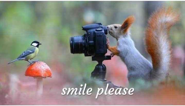लवली एनिमल फोटो😘 - smile please - ShareChat