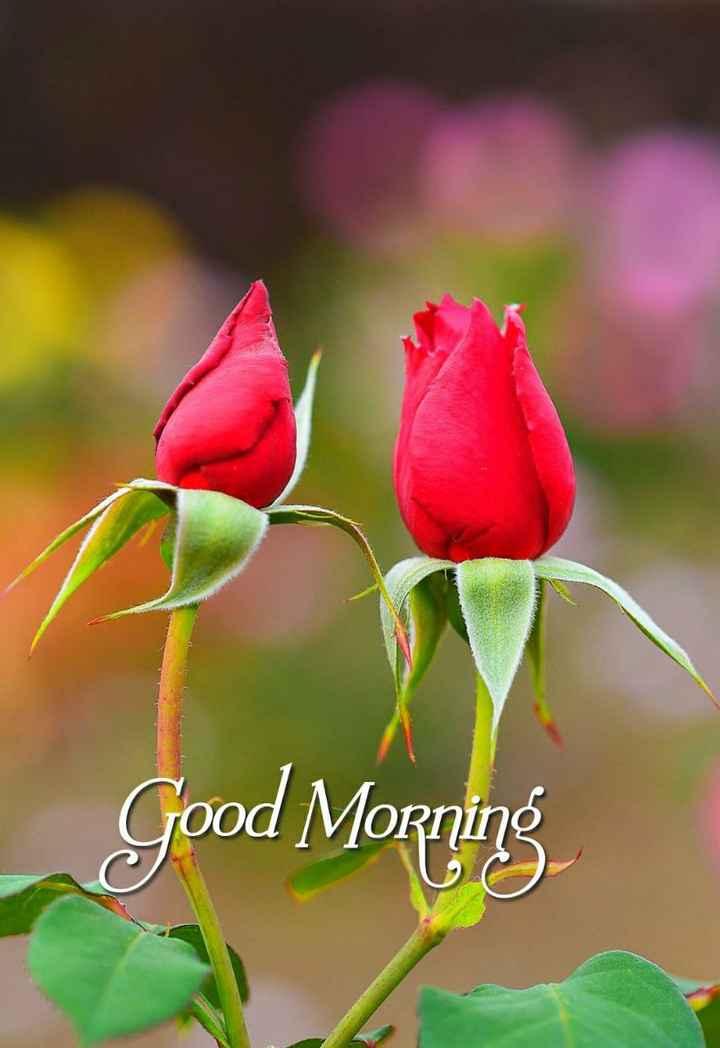 🎹लिरिकल वीडियो गाने - Good Morning - ShareChat