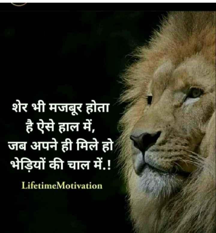 👉 लोगों के लिए सीख👈 - Mu शेर भी मजबूर होता है ऐसे हाल में , जब अपने ही मिले हो भेड़ियों की चाल में . ! Lifetime Motivation - ShareChat